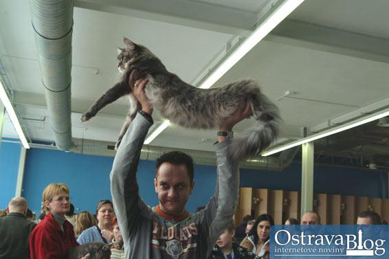 Krásné kočky předváděly své vnady
